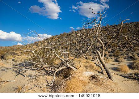 Dead Tree In Desert
