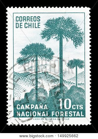 CHILE - CIRCA 1967 : Cancelled postage stamp printed by Chile, that shows Trees and mountain.