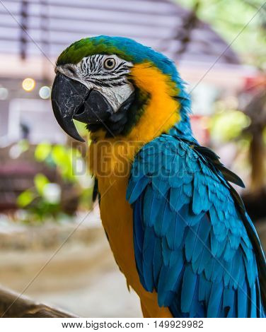A Parrot Macaw Colorful ,beautiful,parrots looking,big parrots