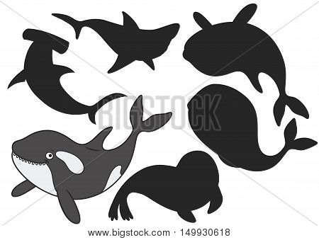 Cartoon killer whale.Find the right shadow image. Educational games for kids.Vector stock illustration