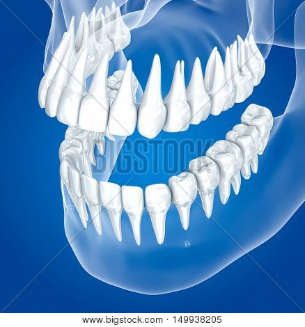 Transparent scull and teeth xray view . 3D illustration