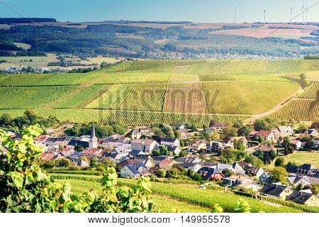 Autumn landscape with vineyards and small European town. Mosel Germany