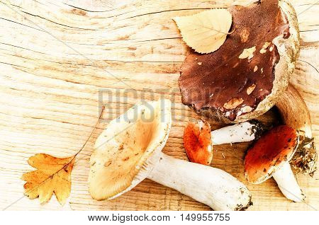 Autumn still life with forest mushrooms. Seasonal cooking concept