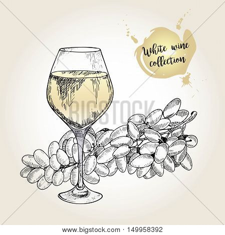 Vector set of white wine collection. Engraved vintage style. Glass and sultana grape. Isolated on grunge background. Deorated with lettering. Use for restaurant cafe store food menu design.