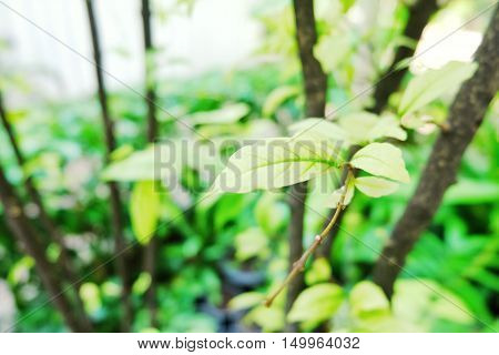 Beautiful green leaf background. green leaves on the green backgrounds.