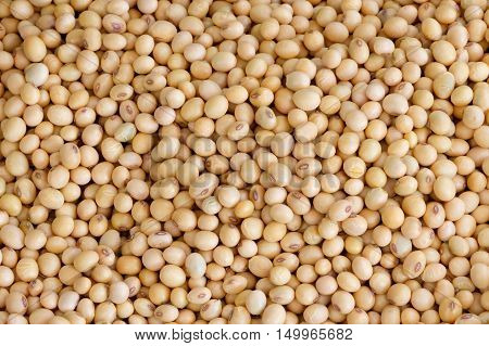 many Soybean background  in the big  garden