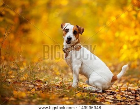 Happy dog outdoors. Pets sitting at autumn