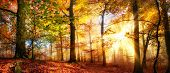 Rays of gold sunlight in a misty forest with warm vibrant colors in autumn poster