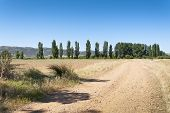 Dirt road to poplar grove in an agrarian landscape in Ciudad Real Province Spain poster