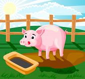 A piglet standing in the mud and drinking from trough. poster