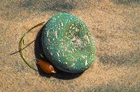 Piedra de color y alga sobre arena