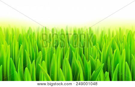 Stock Vector Illustration Realistic Macro Grass, Lawn, Turf On A White Background Eps10