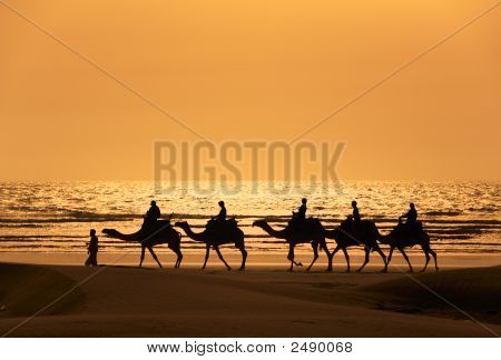 A Silhoutte Of Dromedary And Tourists