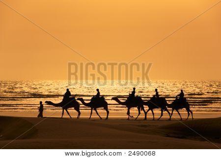 ein Silhoutte Dromedar und Touristen