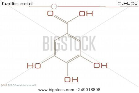 Large And Detailed Infographic Of The Molecule Of Gallic Acid.
