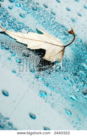 Droplets And A Leaf 2