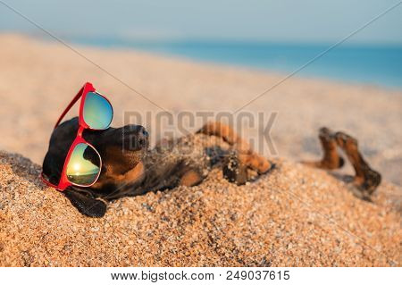 Beautiful Dog Of Dachshund, Black And Tan, Buried In The Sand At The Beach Sea On Summer Vacation Ho