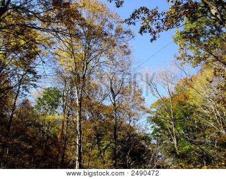 Wooded Landscape Dsc02076