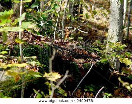 Wooded Landscape Dsc02082
