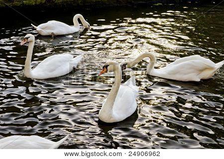 Swan Pond Bruge