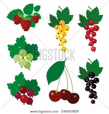 Beautiful Simple Garden Berries Fruit Harvest Summer Clipart