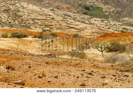 Typical Landscape Of Fuertevenura: Colorful Soil And A Few Succulents In The Wilderness Near Vega De