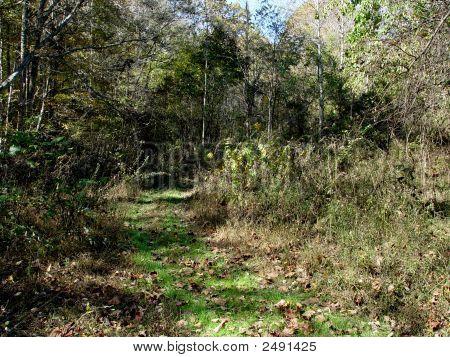 Wooded Landscape Dsc02086