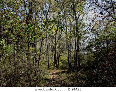Wooded Landscape Dsc02089