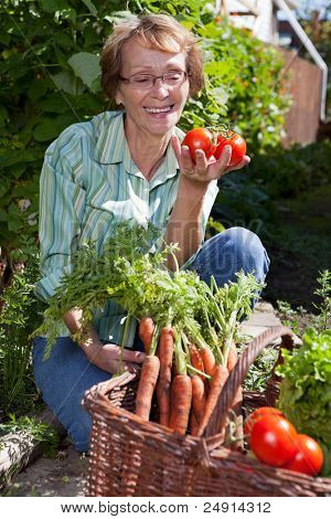 Senior woman in garden picking fresh produce