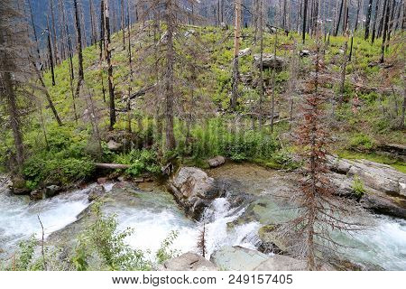 A Lovely Creek Running Through Glacier National Park