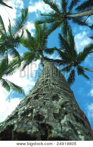 Palm tree to the sky.