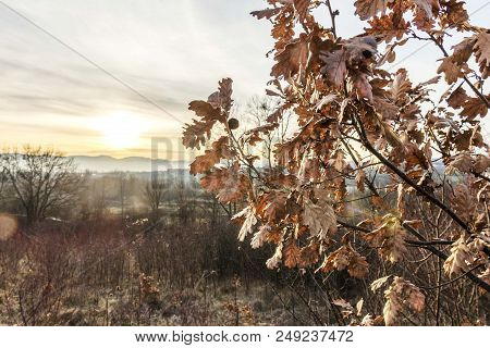 Yule Log Tree Branch Isolated In Woods