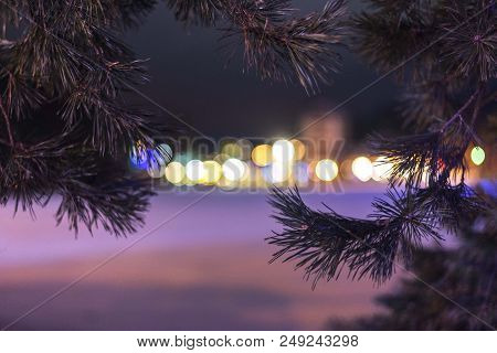 Winter Conifer Tree With Bokeh Light From City Buildings