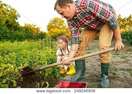 Farming, Gardening, Agriculture And People Concept - Young Man Planting Potatoes At Garden Or Farm.