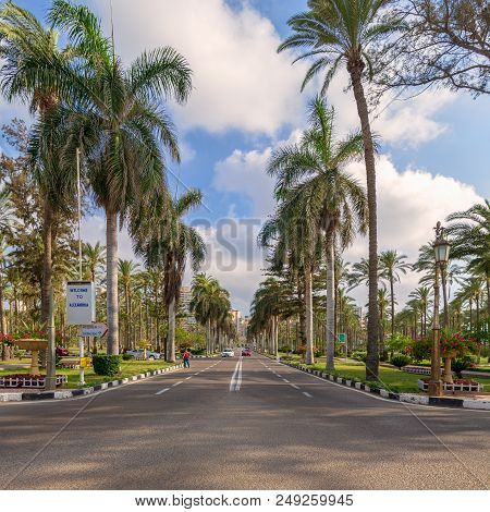 Cairo, Egypt - May 12 2018: Asphalt Road Framed By Trees And Palm Trees With Partly Cloudy Sky In A