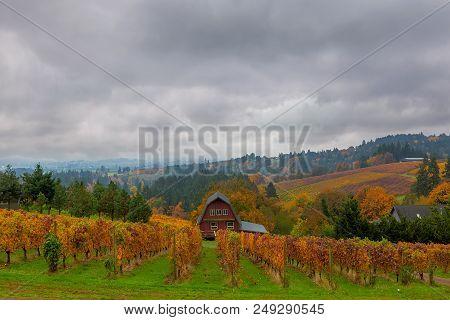 Vineyard In Rolling Hills Dundee Oregon On Foggy Day In Fall Season