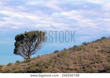 Lone Tree On Hillside In High Desert Against A Cloudy Blue Sky In Central Oregon