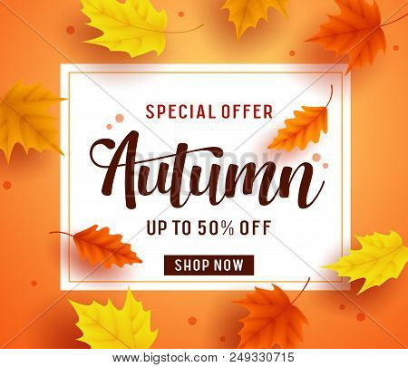 Autumn Special Offer Banner Template With White Space For Text And Colorful Fall Season Maple Leaves