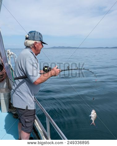Retired Adult Man Fishing On Charter Boat, Catching A Snapper - In Doubtless Bay, Far North District