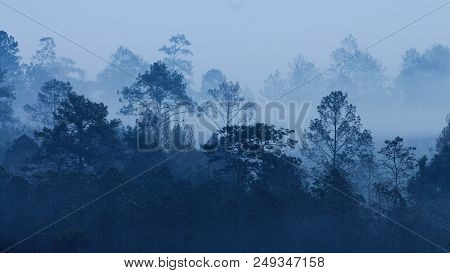 Silhouette Of Tropical Rain Forest Covered In Morning Fog. Misty Mountains Forest Of Thailand. Multi