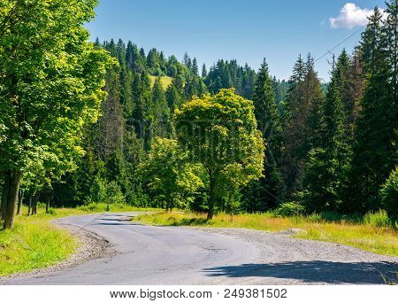 Trees Along The Winding Road. Lovely Nature Scenery In Summer Time. Travel By Car Concept