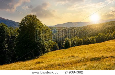 Meadow On The Forested Hill In Summer Mountain Landscape At Sunset. Beautiful Nature Scenery On High