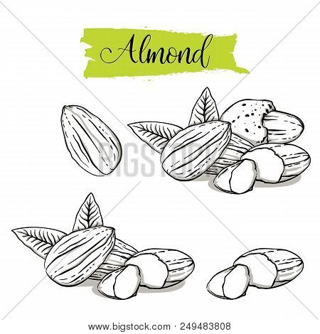 Hand Drawn Sketch Style Almond Set. Single, Group Seeds, Almond In Nutshells Group. Organic Nut, Vec
