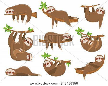 Cartoon Sloths Family. Adorable Sloth Sleepy Animal At Jungle Rainforest Different Lazy Sleeping. Fu