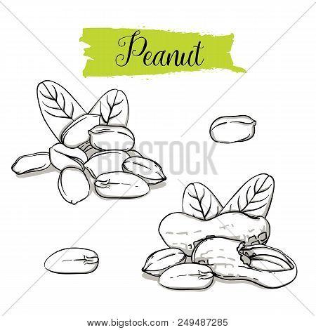 Hand Drawn Sketch Style Peanut Set. Single, Group Seeds, Peanut In Nutshells Group. Organic Nut, Vec