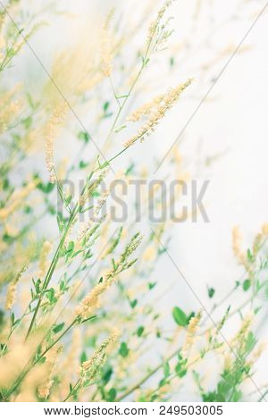Delicate Wildflowers Windy And Light Pastel Colors. Beautiful Tender Nature Background Vertical.