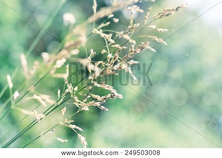 Dry Grass In Windy Meadow, Sunny Green And Blue Faded Tones, Beautiful Abstract Nature Background, C