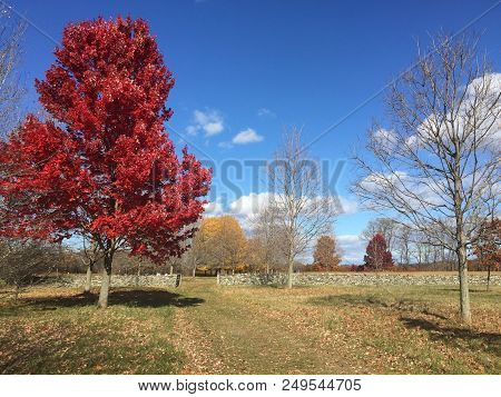 Tree With Red Leaved During Autumn In Upstate New York