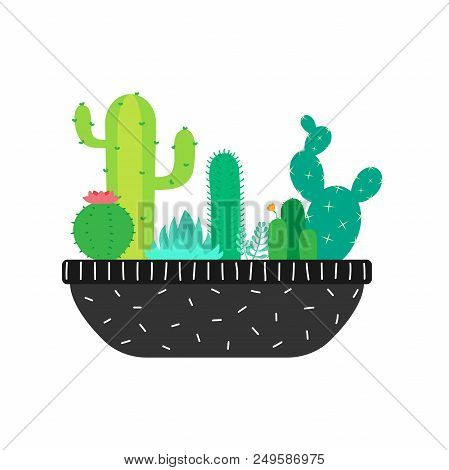 Succulents And Cactuses In A Big Pot. Vector Illustration.