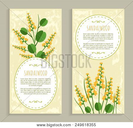 Sandalwood Cards Collection With Text Sample In Frame And Herbs, Set Of Cards And Herbs Sandalwood V